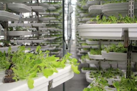 City of Vancouver set to launch long-term food strategy | Vertical Farm - Food Factory | Scoop.it