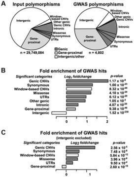 Association Mapping across Numerous Traits Reveals Patterns of Functional Variation in Maize   Plant Genomics   Scoop.it
