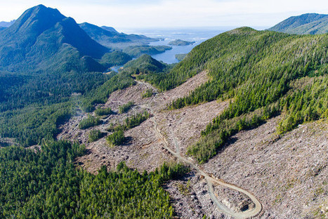 'Insane Damage': Activist Accuses Logger of Breaking Disclosure Law | The Tyee | GarryRogers Biosphere News | Scoop.it