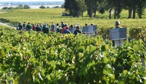 Le vin bio, c'est bon pour l'emploi aussi, selon une étude | Les colocs du jardin | Scoop.it