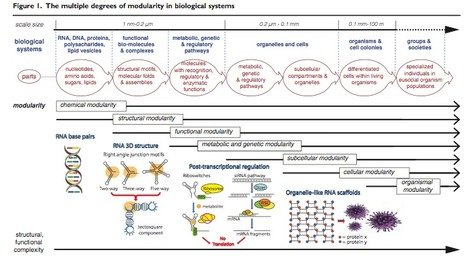 RNA modularity for synthetic biology | SynBioFromLeukipposInstitute | Scoop.it