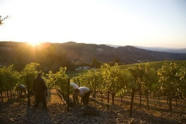 California 2013 vintage set to equal heights of 2012 | Vitabella Wine Daily Gossip | Scoop.it