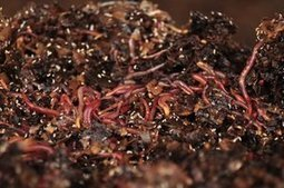 California winery hires earthworms to clean up its wastewater | Zero Waste Europe | Scoop.it