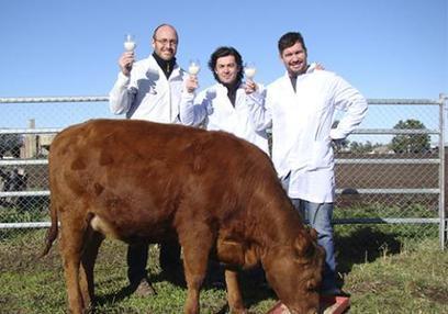 Investigadores argentinos buscan desarrollar leche hipoalergénica | CIBIOGEM | Scoop.it