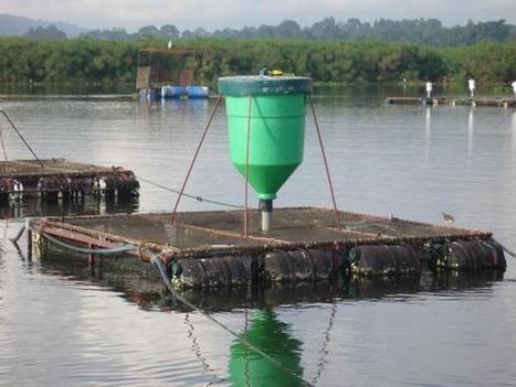 Chimpreports.com-Uganda News - Ugandans Tipped On Cage Fish Farming | Promotion of modern aquaculture practices for sustainable livelihood and wealth creation | Scoop.it