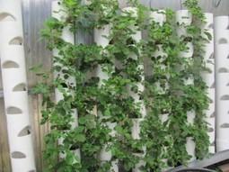 Freeway Farmer — In the shadow of 101, grower preserves East Palo Alto's ... - Peninsula Press | Vertical Farm - Food Factory | Scoop.it