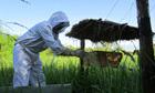 Western Uganda: crop-raiding elephants call for plan bee | Je, tu, il... nous ! | Scoop.it