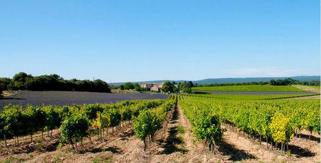 Le premier salon des vins du Roussillon - Vin'Aqui   Le Vin et + encore   Scoop.it