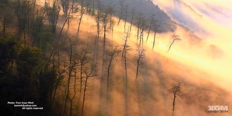 Vẻ đẹp huyền ảo của Sapa trong mây mù   Diễn Đàn Nội Thất - Diễn Đàn Rao Vặt Miễn Phí   songkinhcut   Scoop.it