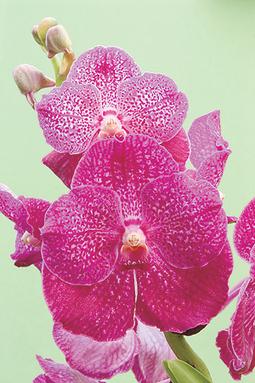 Casa e Jardim - NOTÍCIAS - 10 dicas para cuidar melhor das suas orquídeas   Orquídeas   Scoop.it