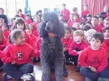 DOG TRAINING BY PROFESSIONAL DOG TRAINER:- WESLEY LAIRD: Training Dogs Is As Educating Children | Dog  Training Melbourne | Scoop.it