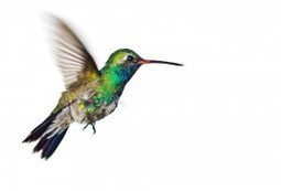 3 Steps to Benefit from Google Hummingbir | Social media | Scoop.it
