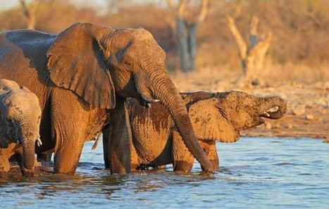 Are state rangers really killing Zim's elephants? | Conservation | Scoop.it