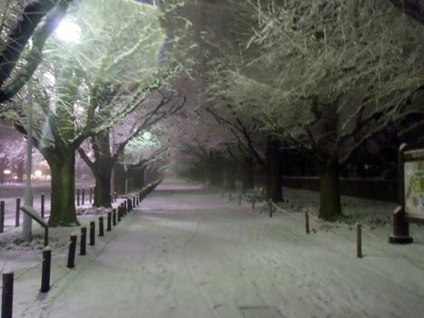 Tokyo Snow in Gaienmae / Omotesando! | JapanxHunter | Tokyo Japan Lifestyle, Food & Drinks! | Scoop.it