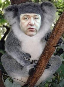 Carmichael the Coalition koala   Unionist Shenanigans   Scoop.it