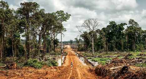 Africa's Vanishing Forests | world news | Scoop.it