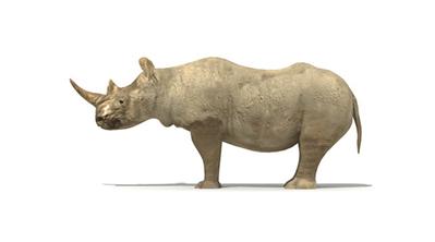 Rhinoceros en 3D | 3D Library | Scoop.it