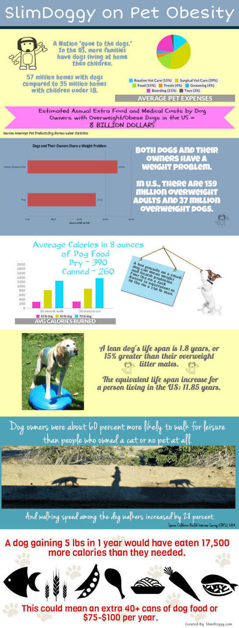 Pet Obesity Facts and Figures (Infographic) | Tackling Obesity | Scoop.it