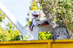 Professional tree removal in Lodi - Lodi News-Sentinel | Environmental Friendly | Scoop.it