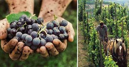 Le vignoble bio ralentit sa progression en France | Winemak-in | Scoop.it