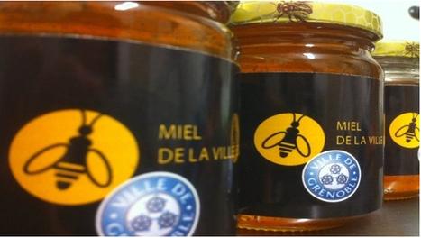 Une abeille citadine : pour le plaisir de nos papilles et de nos balcons   problématique   Scoop.it