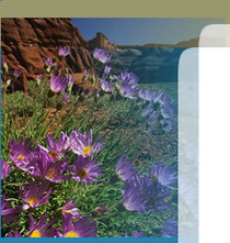 Water Wise Utah - Outdoors | Water Conservation for Lawn and Landscape | Scoop.it