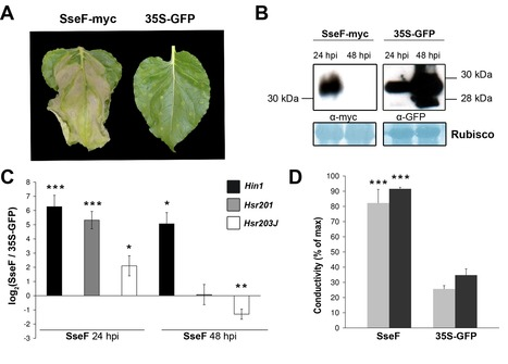 SseF, a type III effector protein from the mammalian pathogen Salmonella enterica, requires resistance-gene-mediated signalling to activate cell death in the model plant Nicotiana benthamiana - Üst... | Publications @ the Börnke Lab | Scoop.it