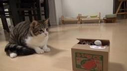 Meow Someone Bought Me A Kitten in A Box! | Catnip Daily | Scoop.it