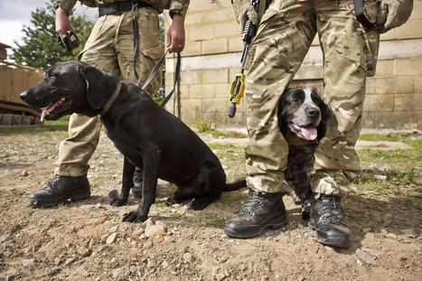 Outrage Over Retired Military Dog Deaths | Animal Rights | Scoop.it