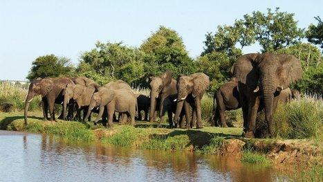 Ferie i Sydafrika   Rejser Afrika   Scoop.it