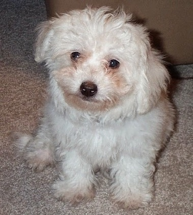 Sliding vs Deciding: The Blog of Scott Stanley: You Fall In Love with the Front End of the Puppy | Healthy Marriage Links and Clips | Scoop.it