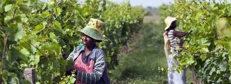Wine Offers Brighter Future for Ethiopia | Vitabella Wine Daily Gossip | Scoop.it