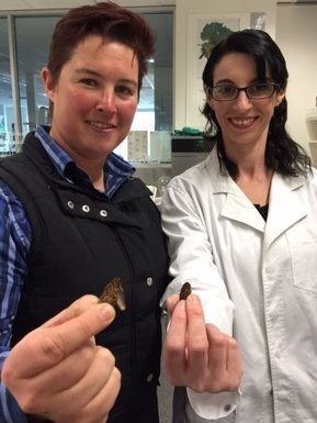 Insects for dinner? Adelaide researchers to gauge attitudes towards eating bugs | Entomophagy: Edible Insects and the Future of Food | Scoop.it