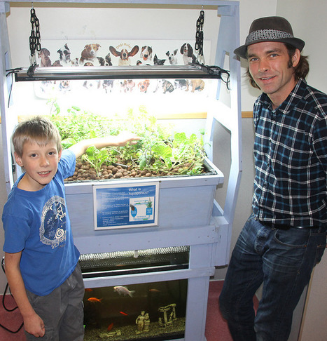 Pick of the crop at Hillview school | Aquaponics in Action | Scoop.it