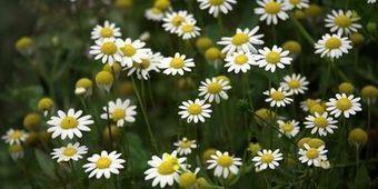 Les 10 plantes qui soignent   pour mon jardin   Scoop.it
