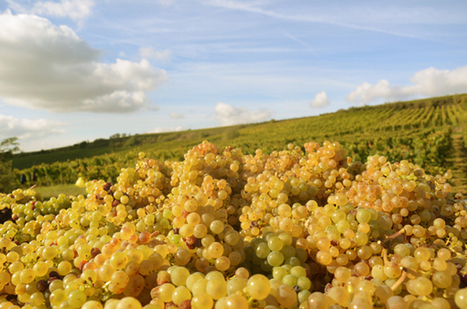 Marie's Blog: First Look At The 2012 Vintage For Germany | Wine ratings, Wine reviews, Wine tasting notes & Wine videos | Southern California Wine and Craft Spirits Journal | Scoop.it