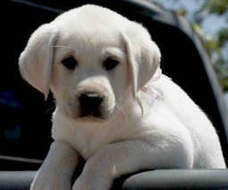 Free Dogs and Puppies in Decatur, Alabama   Free Dogs and Puppies   TechKev   Scoop.it