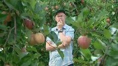 Prigonrieux (24) : pommes, pommes, pommes, pommes... - France 3 Aquitaine   Agriculture en Dordogne   Scoop.it