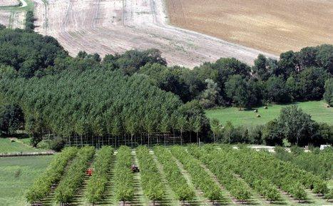 Des arbres pour rafraîchir la ville   Résilience climatique des villes   Scoop.it