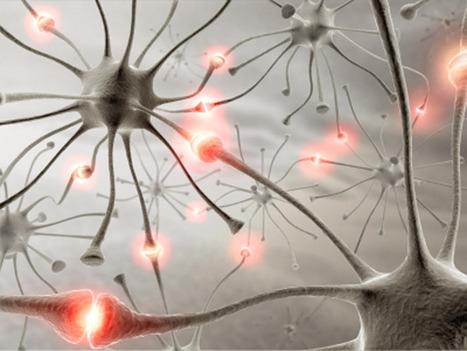 Investigan una vía para la regeneración nerviosa en una lesión medular | eSalud Social Media | Scoop.it