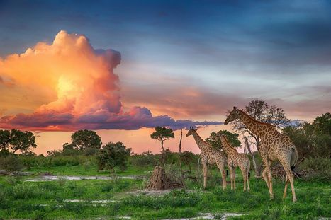 Pictured: Stunning Okavango Delta sunset caught on camera in breathtaking photographs | Inspirational Photography to DHP | Scoop.it