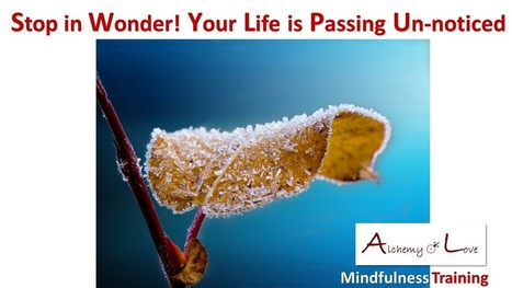 Mindfulness Training: Spiritual Journey not a Weekend Outing | How to Be More Mindful | Scoop.it
