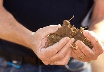 IDEAGRO | Investigación y Desarrollo Agroalimentario - La importancia de las bacterias en la agricultura | Agrobrokercommunitymanager | Scoop.it