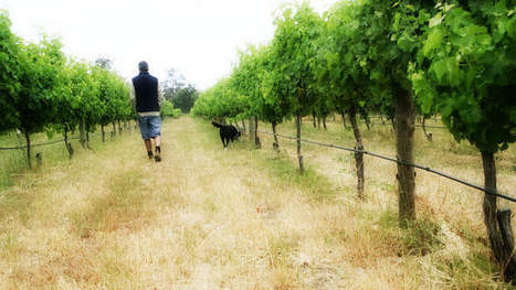 Wineries on the move as climate change bites | Climate change challenges | Scoop.it