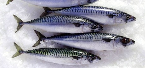 EUROPEAN UNION: European Commission welcomes Iceland's announcement of mackerel quota for 2014 | Aquaculture and Fisheries - World Briefing | Scoop.it