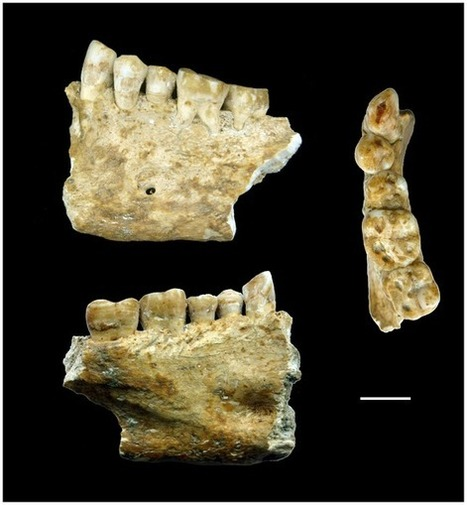 Neolithic Dentistry In 4,500 B.C. | World Neolithic | Scoop.it