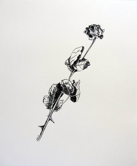 original ink drawing | Decorations | Scoop.it