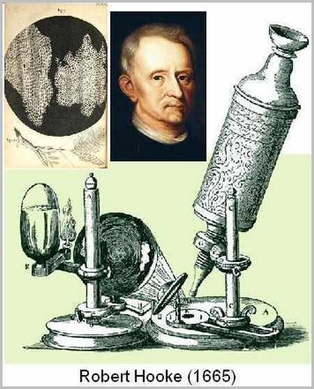 Microscopios Ópticos | Salud Visual (Profesional) 2.0 | Scoop.it