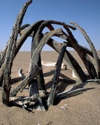 The 'mysterious' whale graveyard discovered in a desert | Anthropology and Archaeology | Scoop.it