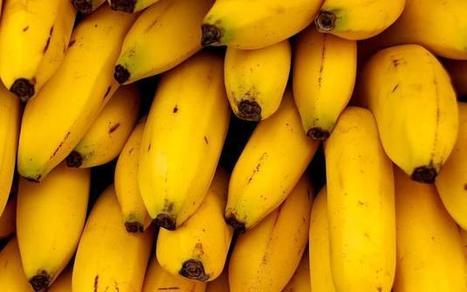 Banana genome sequence will aid crop improvement | Genetic world | Scoop.it